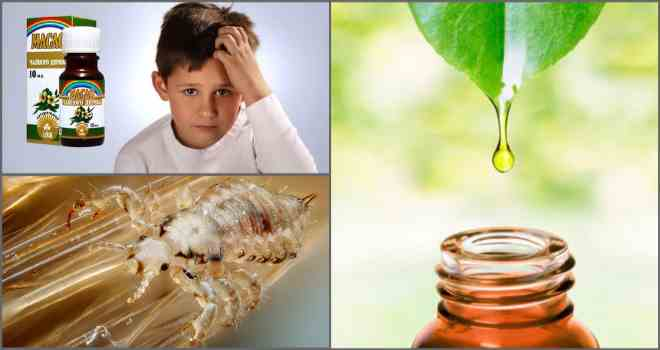 Как использовать эфирные масла от вшей и гнид в домашних условиях? точные рецепты и способы применения