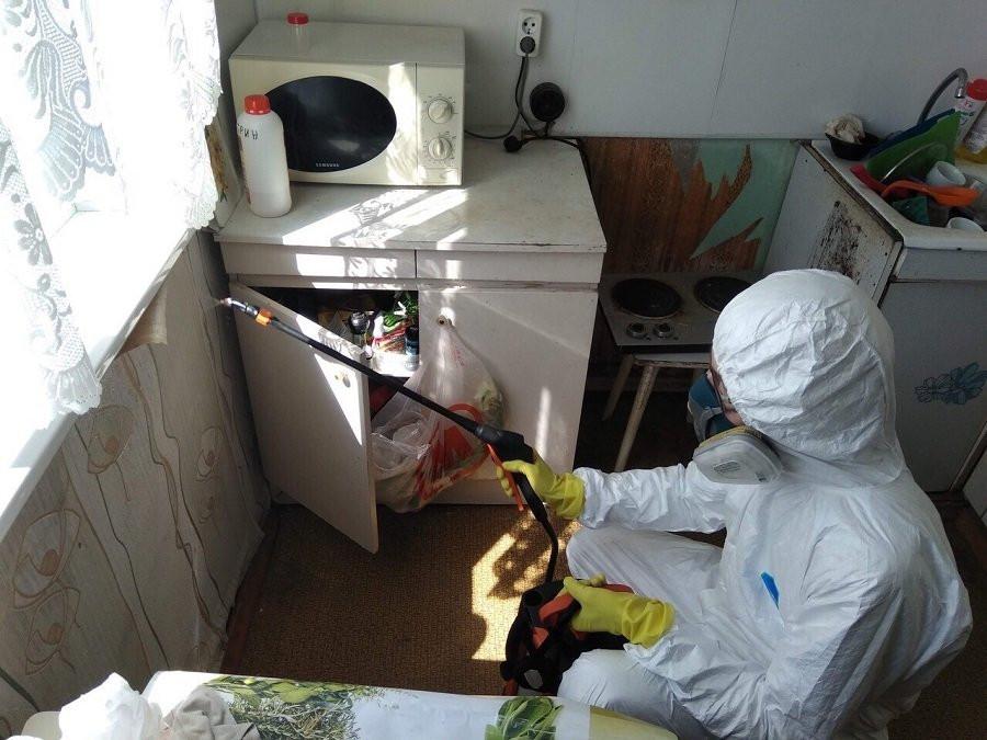 Обработка квартиры от тараканов профессионалами – результат и стоимость услуги