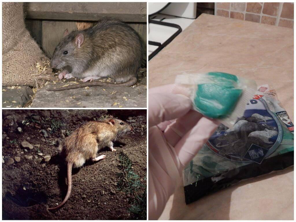 Собака съела крысиный яд: оказание первой помощи