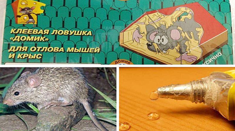 Клей от крыс и мышей, как правильно использовать! обзор самых популярных производителей