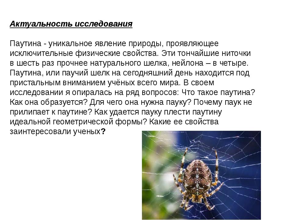Этот паук плетет самую прочную паутину. в чем его секрет? - hi-news.ru