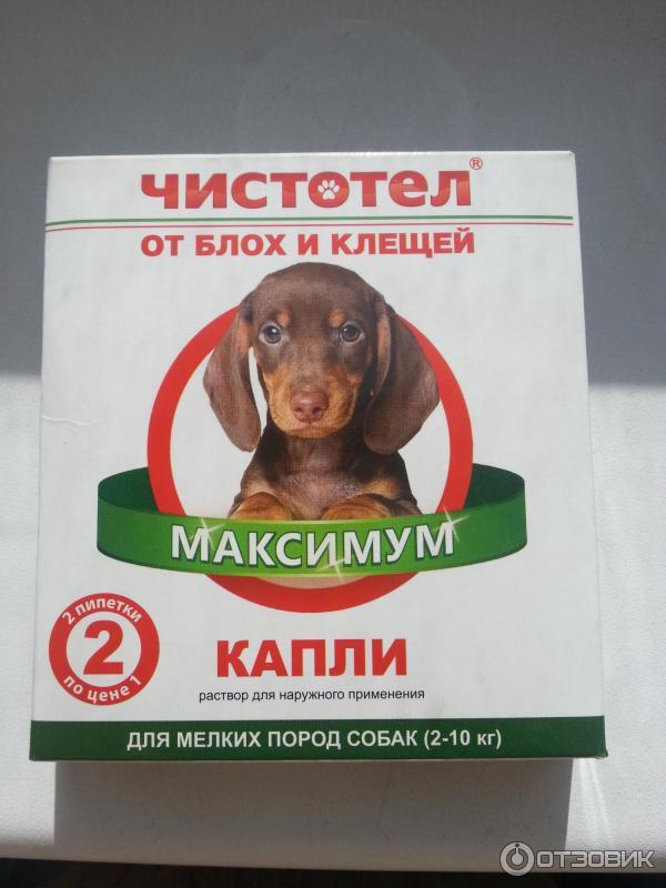 Капли от клещей для собак практик - отзывы и инструкции к применению