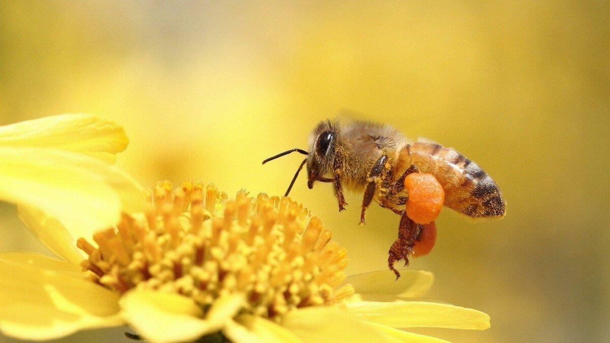 Виды болезней пчел и методы их лечения