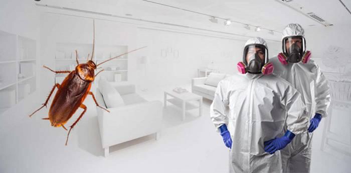 Выбираем лучшее средство от тараканов