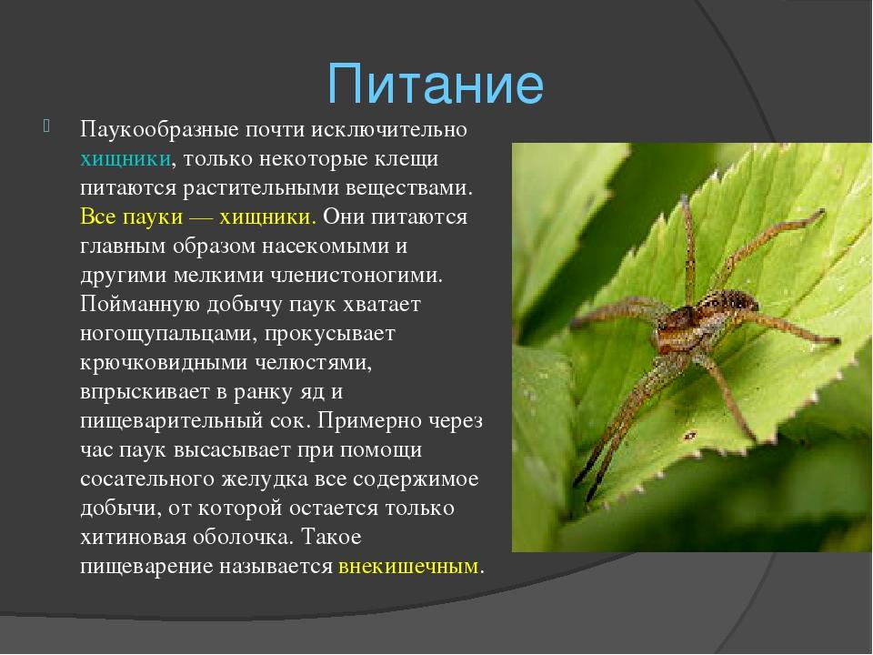 Класс насекомые. общая характеристика, строение, размножение, разнообразие и значение насекомых