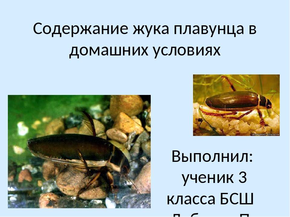Плавунец окаймленный место обитания, питание, форма тела, окраска