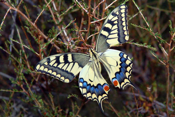 Виды бабочек — внешний вид, разновидности, строение насекомого