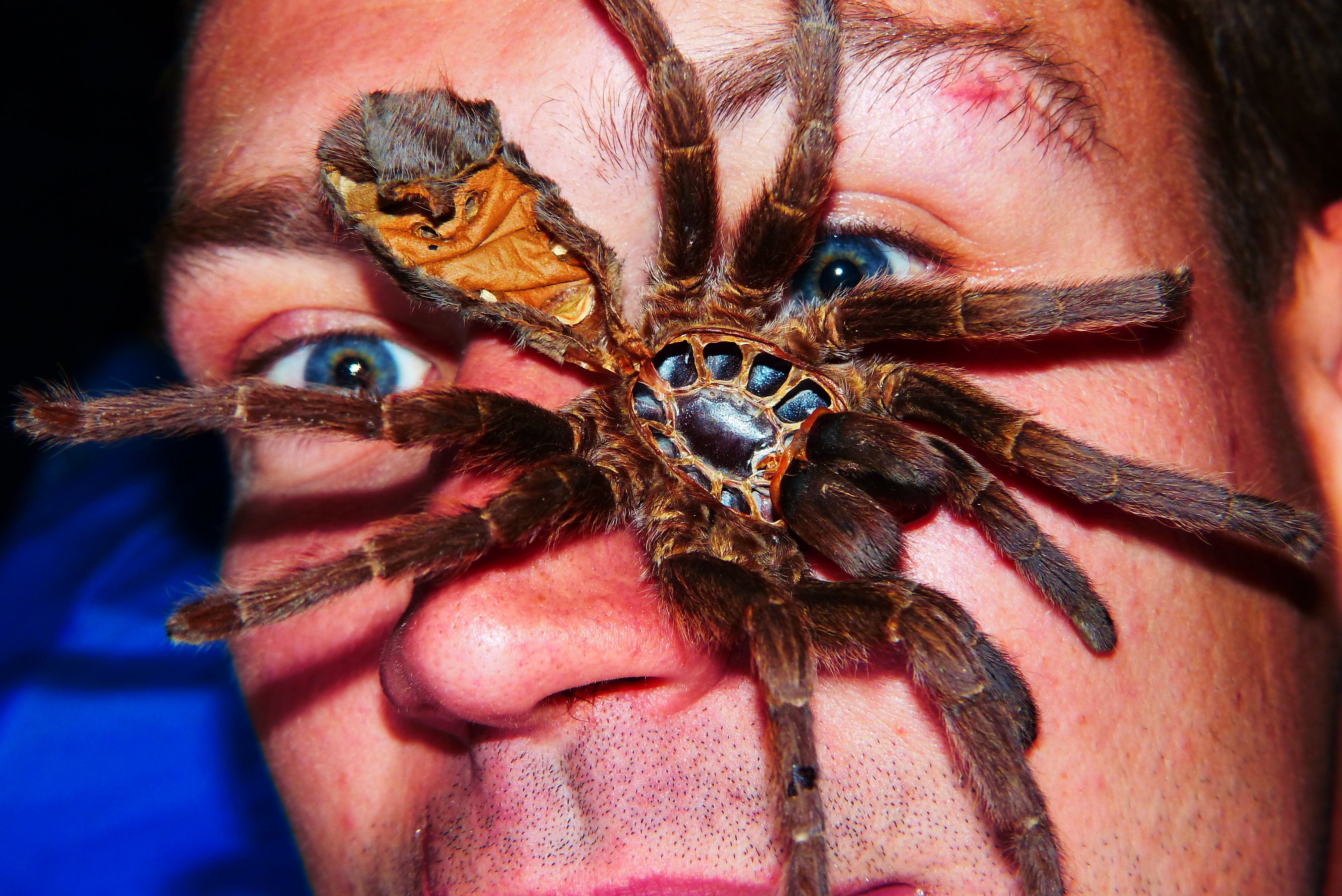 Топ-10 самых ядовитых пауков в мире