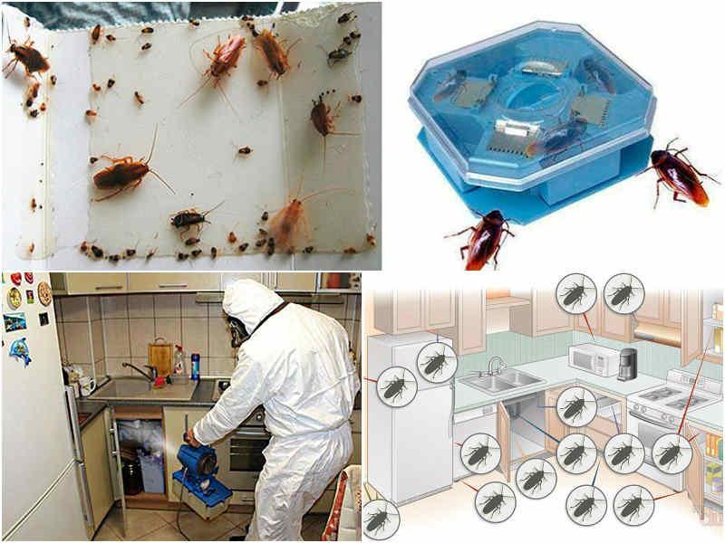 Как избавиться от тараканов в общежитии: основные средства борьбы