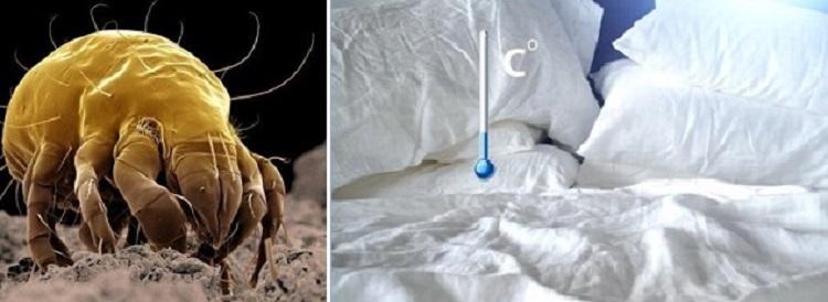 Среда обитания пылевых клещей и меры борьбы с ними
