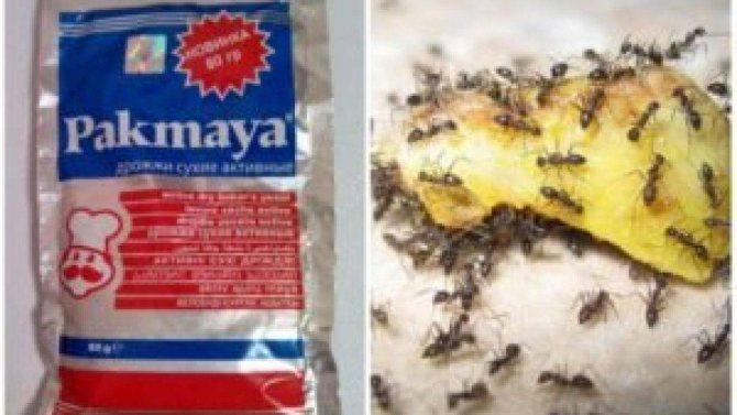 Как избавиться от муравьев в огороде навсегда народными средствами - чистотел, кофе, керосин и другие методы