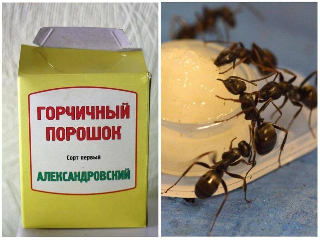 Применение горчицы в огороде от болезней и вредителей