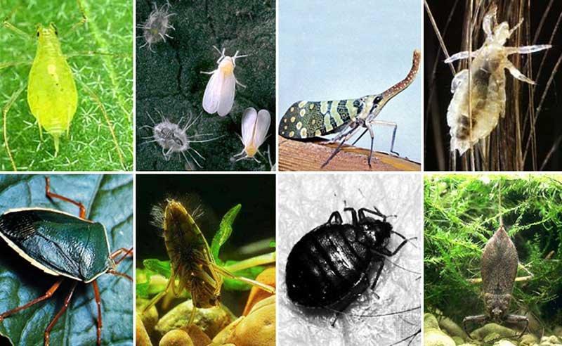 Полезные насекомые в саду и огороде: фото, названия хищников-энтомофагов, защищающих растения от вредителей