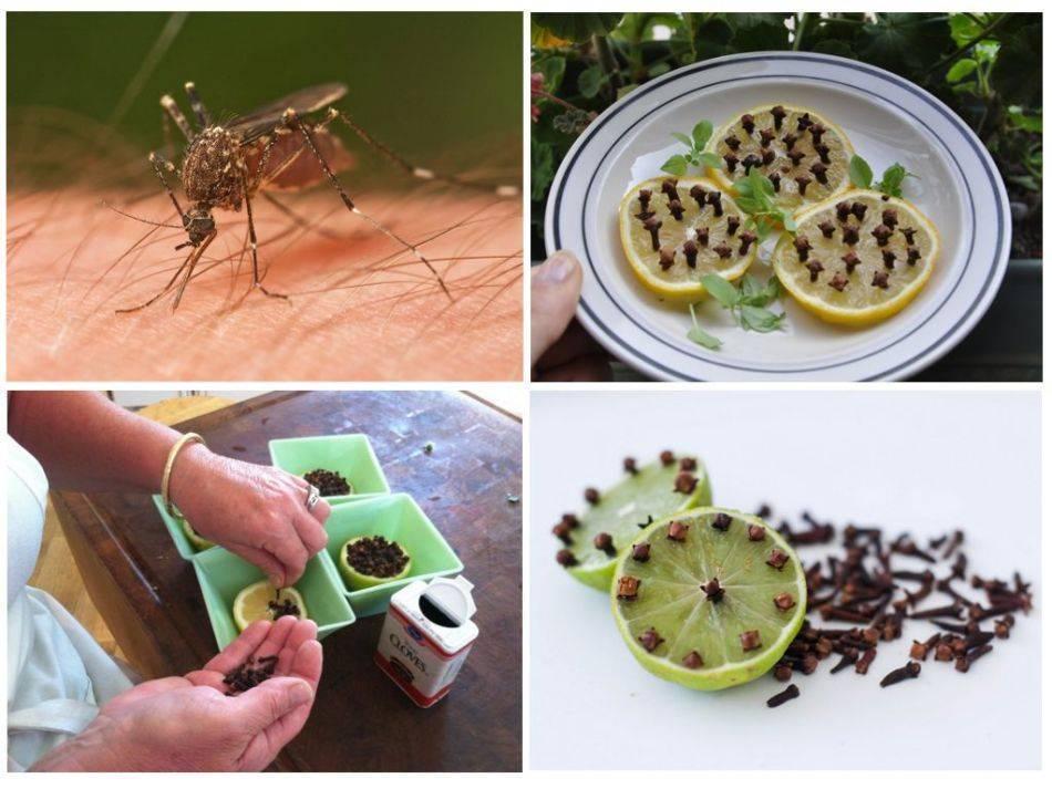 Народное средство от комаров — действенные способы защиты от насекомых