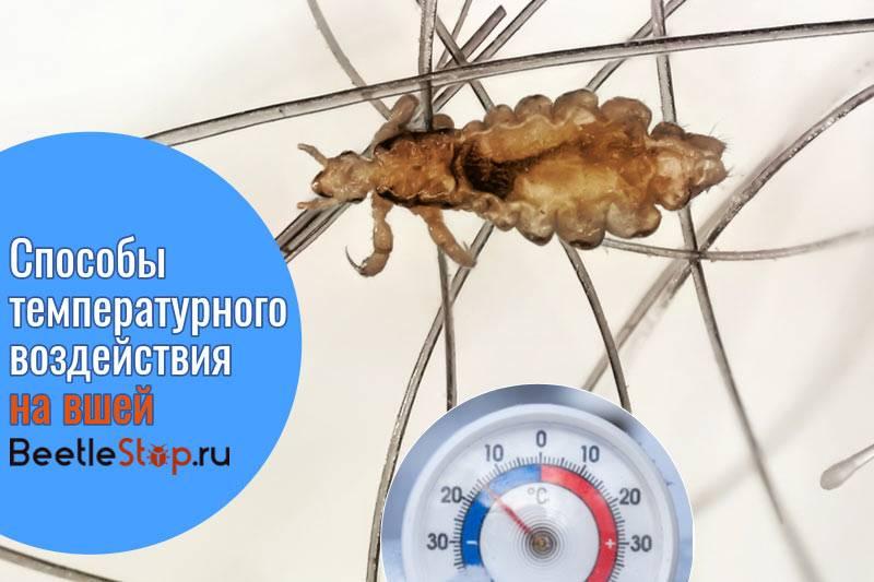 При какой температуре погибают вши и гниды?