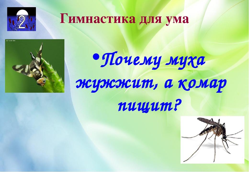 Почему муха жужжит, а комар пищит, или кто самый быстрый