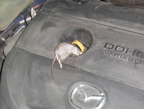 Как поймать мышь в частном доме или гараже? | как избавиться от мышей: самый простой способ | клеевые ловушки для мышей