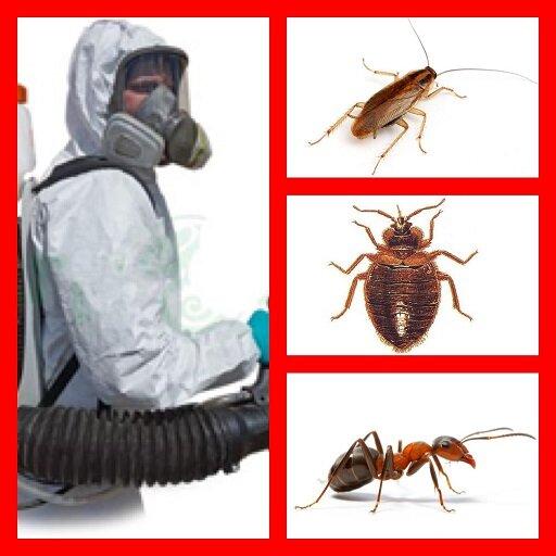 Как избавиться от тараканов в квартире раз и навсегда в домашних условиях
