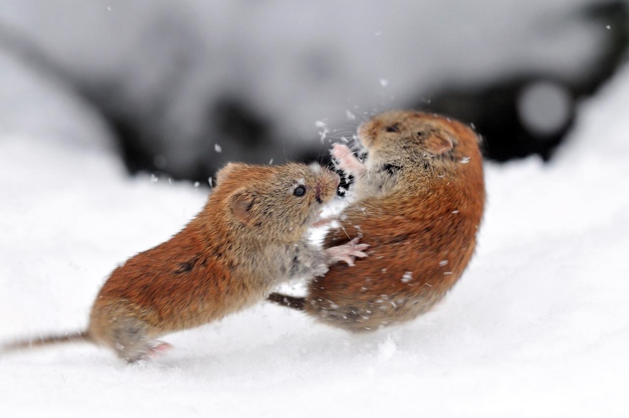 Как звери готовятся к зиме. интересные факты о подготовке животных к зиме и их приспособление к зимним морозам