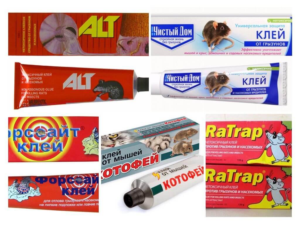 Как выбрать клей от мышей и грызунов: отзывы, инструкция как пользоваться