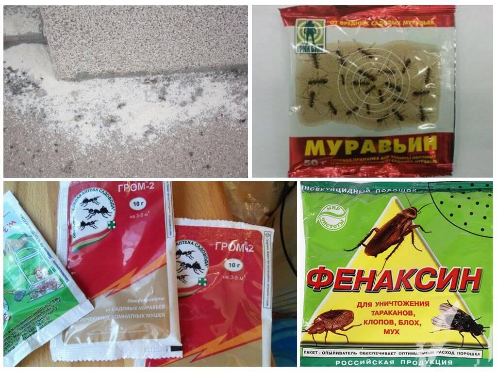 Как избавиться от муравьев на дачном участке: препараты, средства