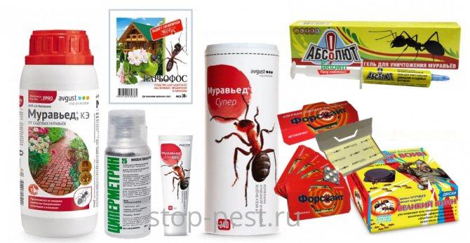 Порошок от муравьев: обзор, особенности применения, эффективность и отзывы