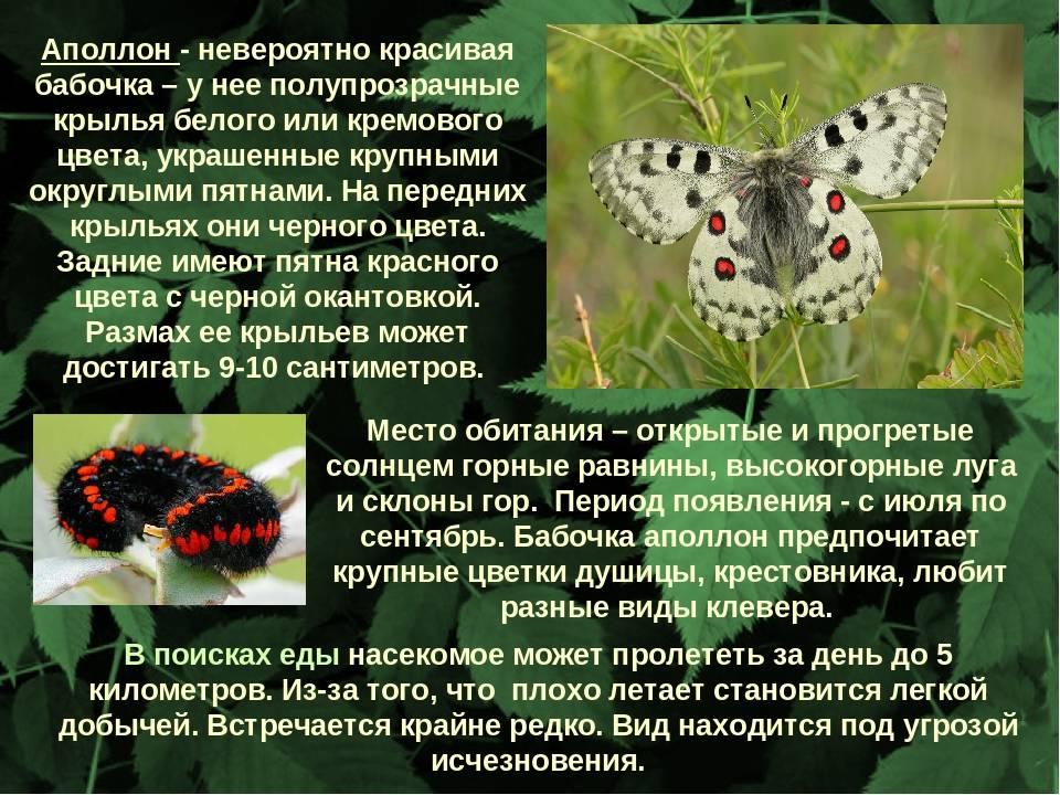 Жук майка фиолетовая — ядовитое насекомое, которое никому не угрожает