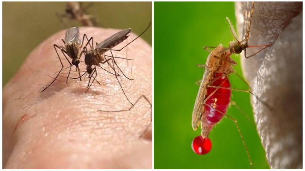 Когда комары пропадают, спят или нет?