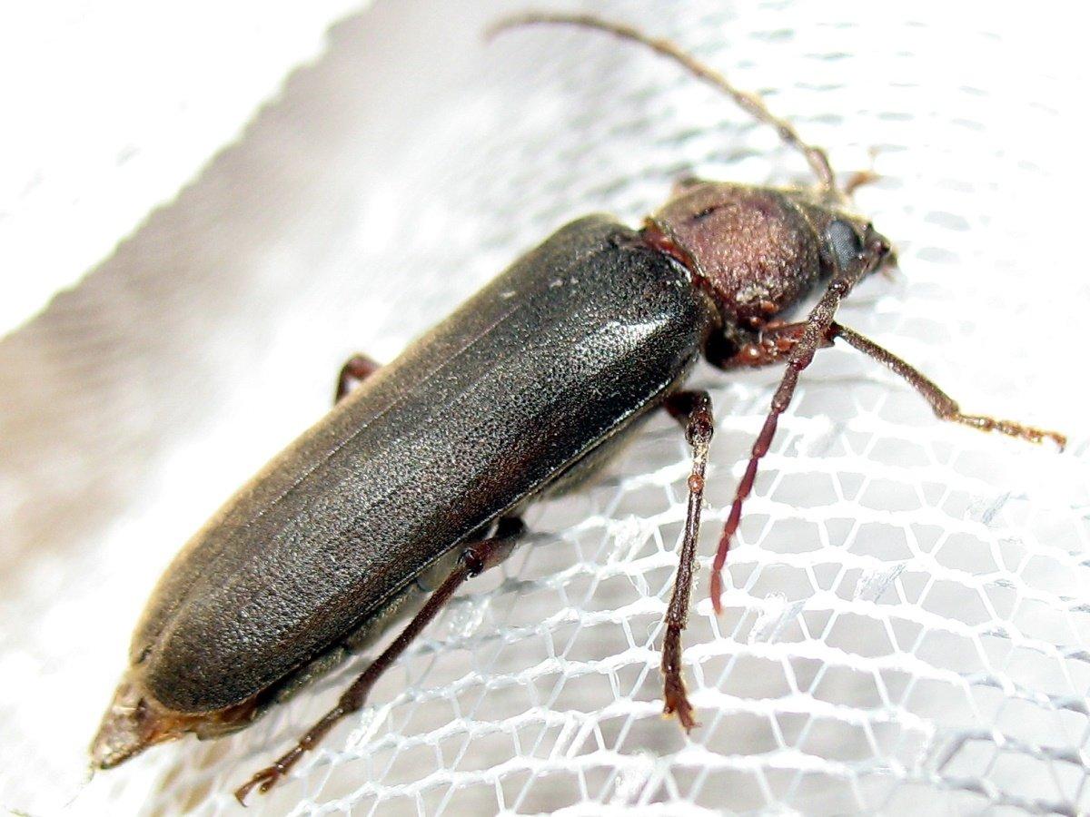 «делисия» средство от муравьев - как действует немецкий порошок