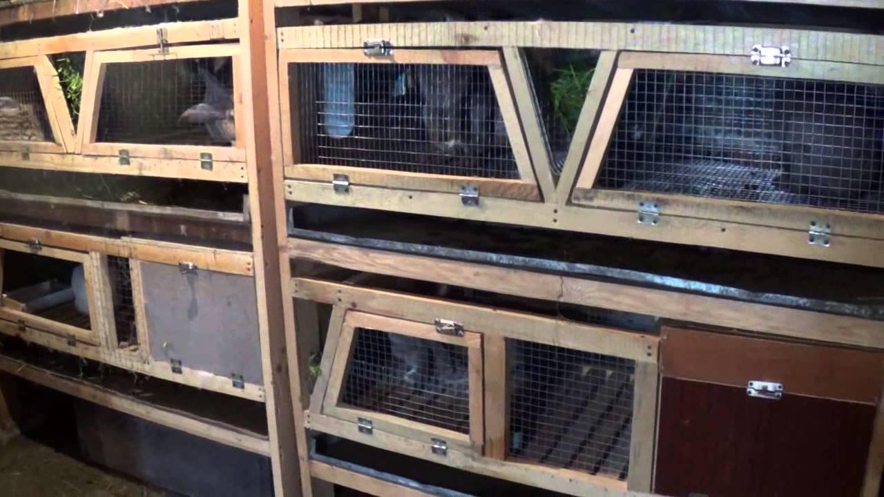 Нюансы зимнего окрола кроликов и правила разведения при уличном содержании