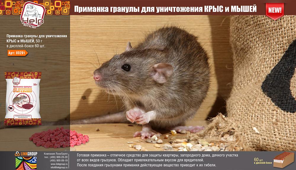 Средства против крыс и мышей и нюансы их применения в домашних условиях
