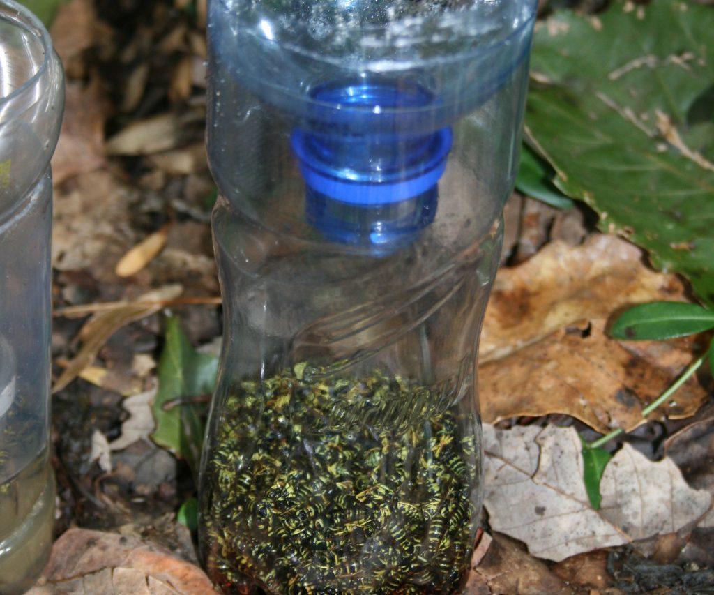 Ловушка для ос: как сделать из пластиковой бутылки