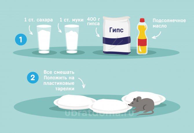 Обзор действенных способов борьбы с мышами