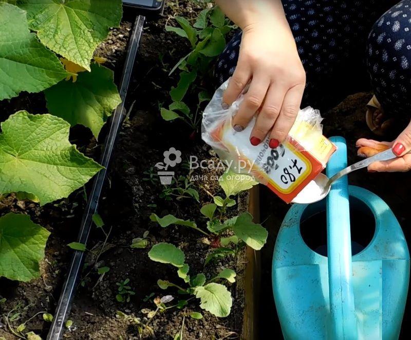 Применение пищевой соды на огороде, как удобрения и защиты растений от вредителей