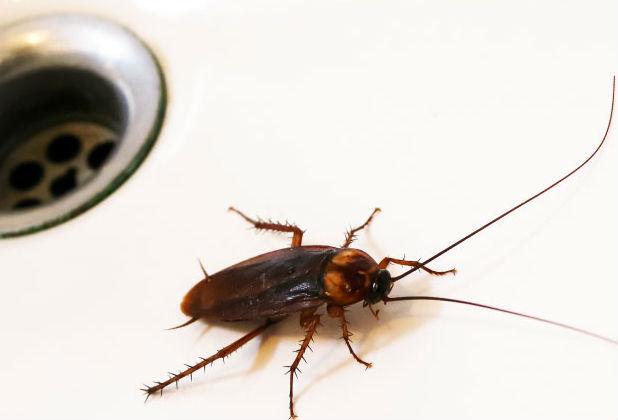 Боязнь тараканов (блаттофобия): название фобии, как избавиться