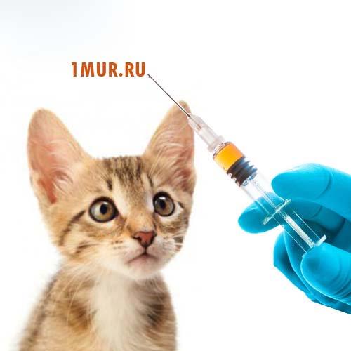 Вакцинация против коронавирусной инфекции covid-19