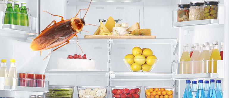 Откуда берутся тараканы в квартире: почему появляются, где прячутся, что делать и как от них избавиться русский фермер