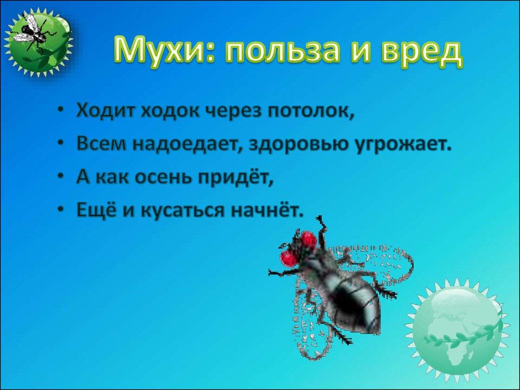 Мясная муха: как бороться и выращивать