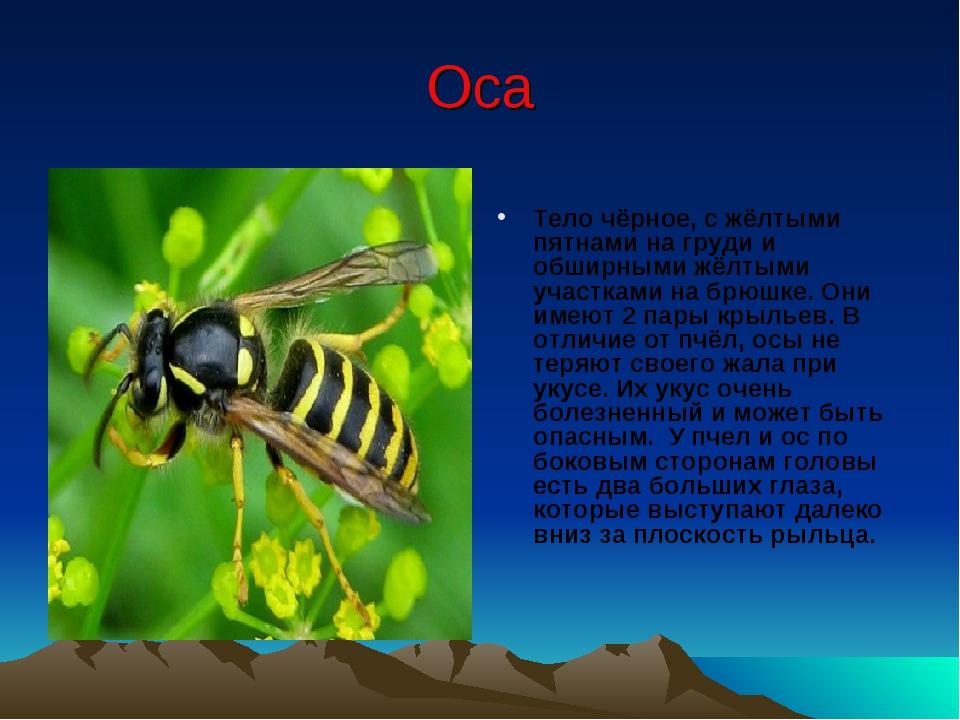 Чем отличается оса от пчелы для детей