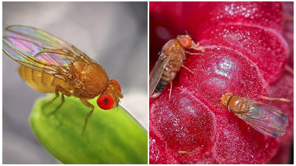 Откуда берутся мухи в квартире: как правильно бороться