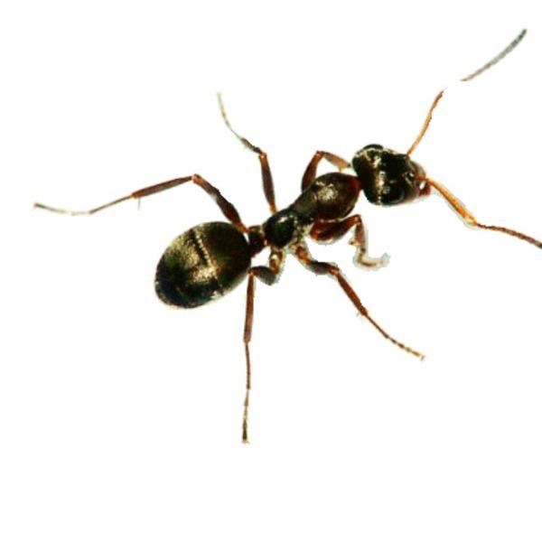 Интересные факты о муравьях – топ 5