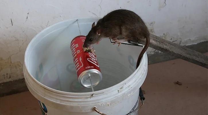 Обзор 6 ловушек для крыс: самодельные, живоловки, верша, цюрнера