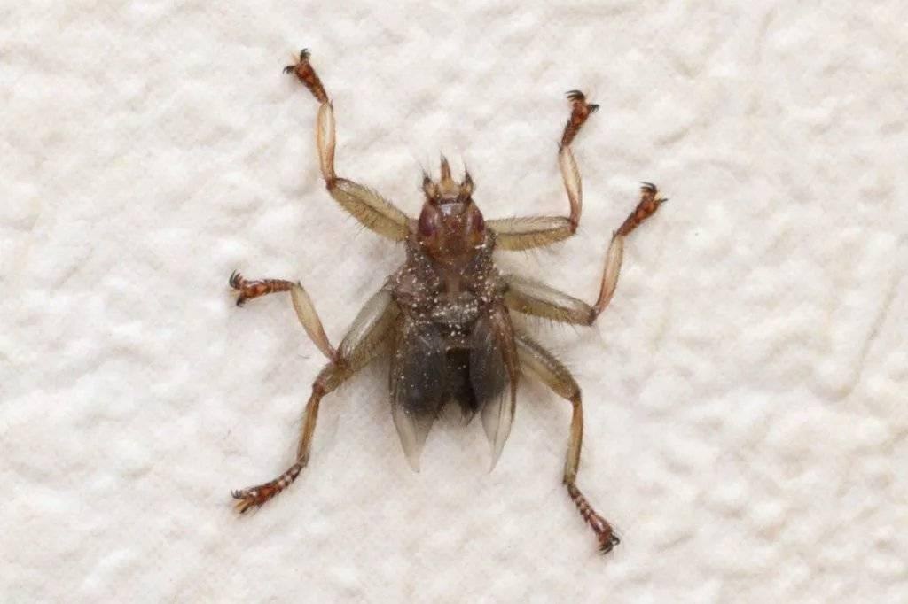 10 кровососущих насекомых планеты - zefirka