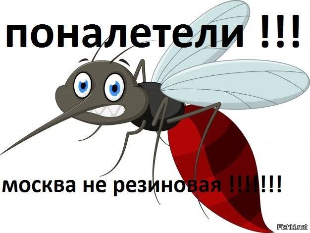 Когда пропадают комары и где они прячутся зимой
