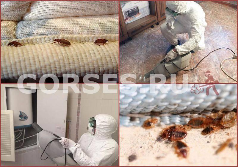 ❶ при какой температуре погибают клопы, их яйца и их личинки, а так же при стирке белья
