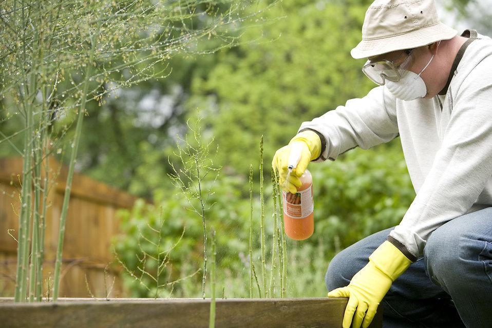 Обработка дачного участка от клещей – как бороться с клещом на даче, в саду, в огороде, в палисаднике, в лесу