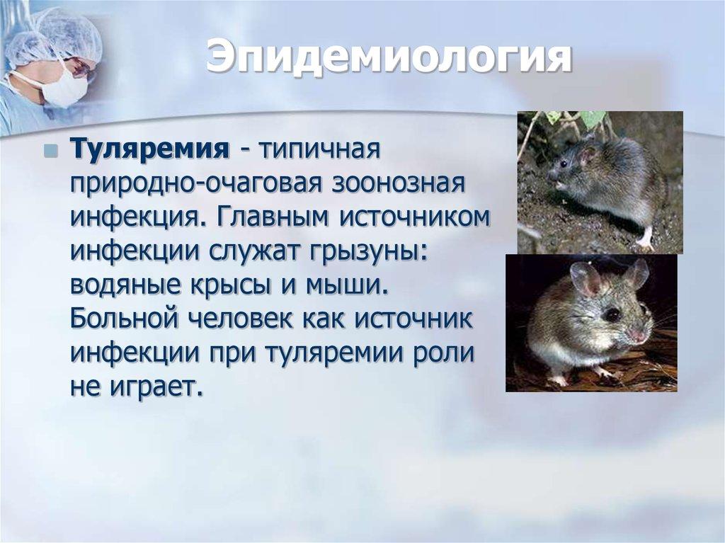 Чем крысы опасны для человека и переносчиками каких болезней они являются