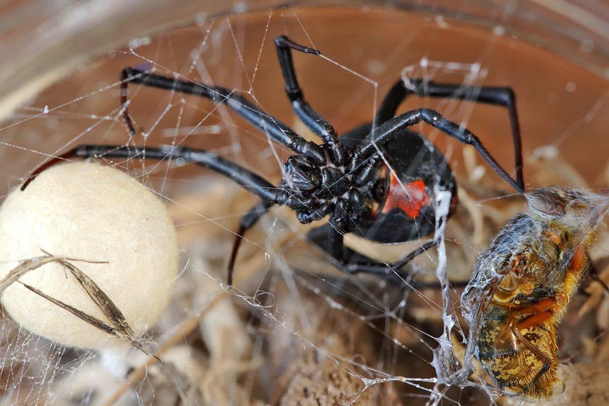 Виды пауков с фото и названиями: ядовитые пауки и безопасные