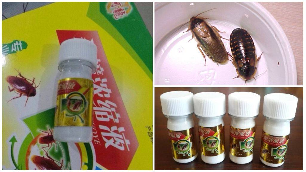 Лучшее средство от тараканов в квартире - рейтинг действенных препаратов