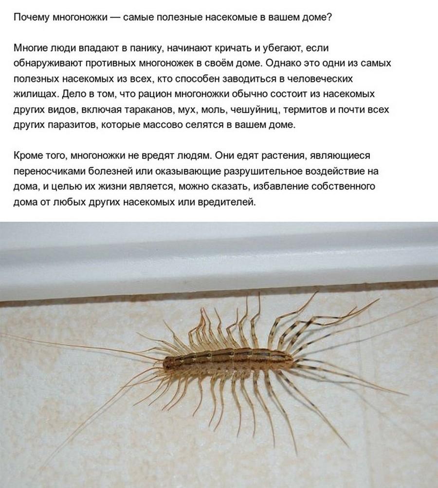 Древняя многоножка. чем на самом деле является насекомое многоножка? распространенное описание, виды, вред и польза, способы борьбы